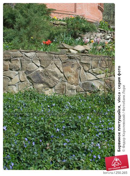 Барвинок плетущийся,  vinca - серия фото, фото № 250265, снято 12 апреля 2008 г. (c) Федор Королевский / Фотобанк Лори