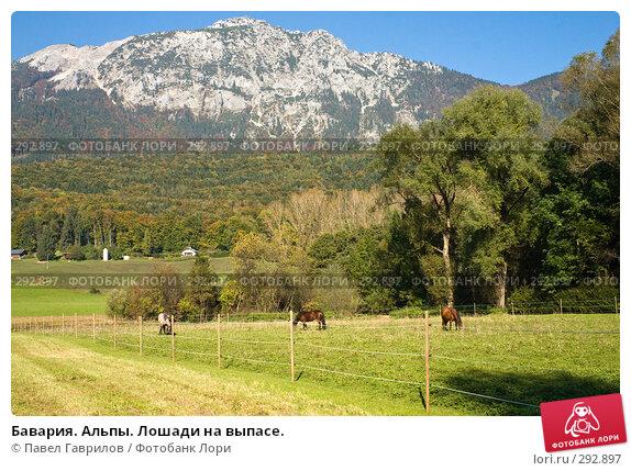 Бавария. Альпы. Лошади на выпасе., фото № 292897, снято 16 октября 2005 г. (c) Павел Гаврилов / Фотобанк Лори