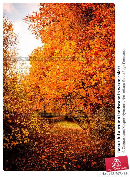 Beautiful autumn landscape in warm colors. Стоковое фото, фотограф Zoonar.com/Kasper Nymann / age Fotostock / Фотобанк Лори