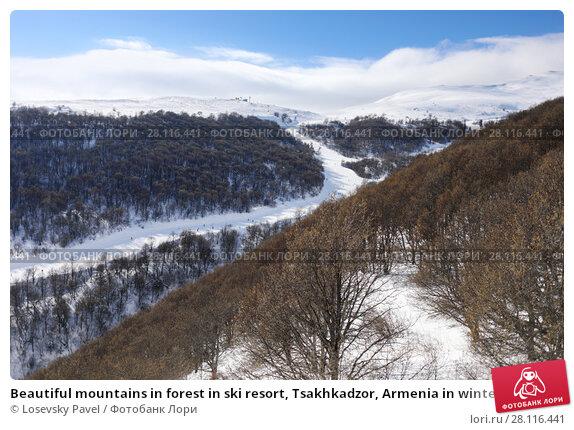 Купить «Beautiful mountains in forest in ski resort, Tsakhkadzor, Armenia in winter sunny day», фото № 28116441, снято 6 января 2017 г. (c) Losevsky Pavel / Фотобанк Лори