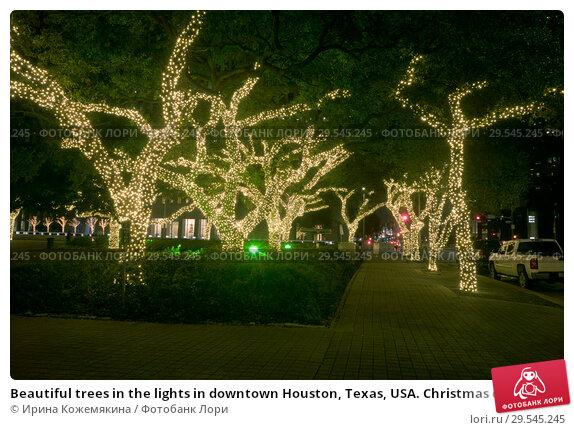 Купить «Beautiful trees in the lights in downtown Houston, Texas, USA. Christmas decoration.», фото № 29545245, снято 9 декабря 2018 г. (c) Ирина Кожемякина / Фотобанк Лори