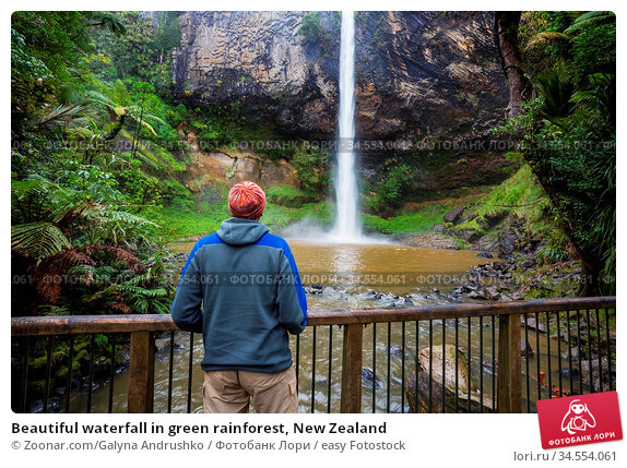 Beautiful waterfall in green rainforest, New Zealand. Стоковое фото, фотограф Zoonar.com/Galyna Andrushko / easy Fotostock / Фотобанк Лори
