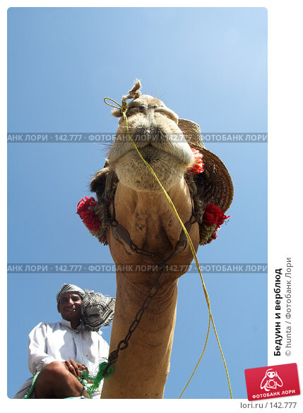 Бедуин и верблюд, фото № 142777, снято 6 сентября 2007 г. (c) hunta / Фотобанк Лори