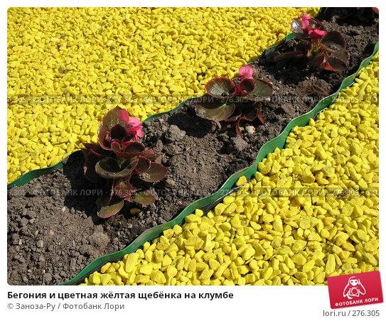 Бегония и цветная жёлтая щебёнка на клумбе, фото № 276305, снято 2 мая 2008 г. (c) Заноза-Ру / Фотобанк Лори
