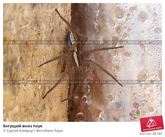 Купить «Бегущий вниз паук», фото № 30141, снято 3 мая 2006 г. (c) Сергей Ксейдор / Фотобанк Лори