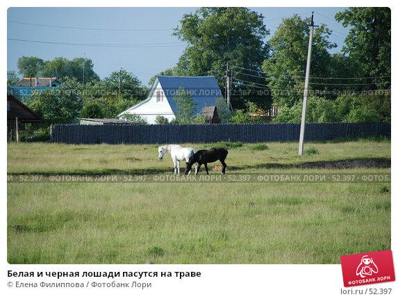 Белая и черная лошади пасутся на траве, фото № 52397, снято 12 июня 2007 г. (c) Елена Филиппова / Фотобанк Лори