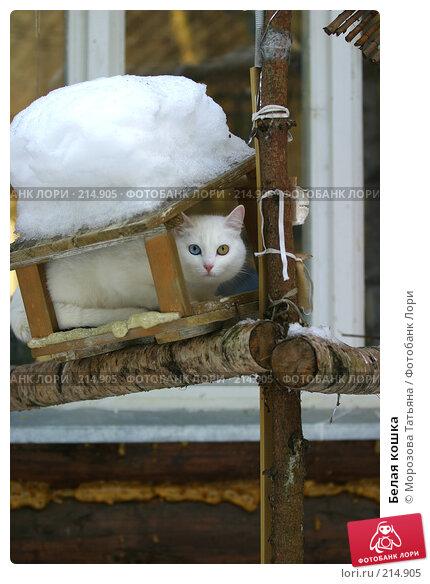 Белая кошка, фото № 214905, снято 15 января 2006 г. (c) Морозова Татьяна / Фотобанк Лори