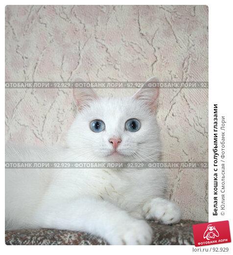 Белая кошка с голубыми глазами, фото № 92929, снято 29 сентября 2007 г. (c) Юлия Смольская / Фотобанк Лори