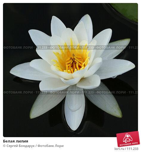 Белая лилия, фото № 111233, снято 21 июля 2007 г. (c) Сергей Бондарук / Фотобанк Лори
