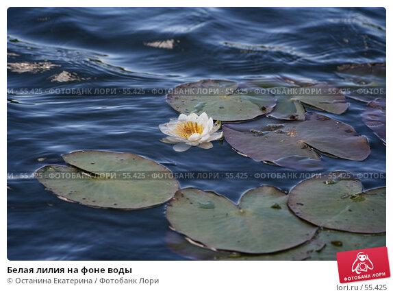 Белая лилия на фоне воды, фото № 55425, снято 24 июня 2007 г. (c) Останина Екатерина / Фотобанк Лори