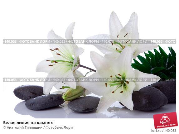 Белая лилия на камнях, фото № 140053, снято 27 июня 2007 г. (c) Анатолий Типляшин / Фотобанк Лори