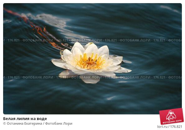 Купить «Белая лилия на воде», фото № 176821, снято 24 июня 2007 г. (c) Останина Екатерина / Фотобанк Лори