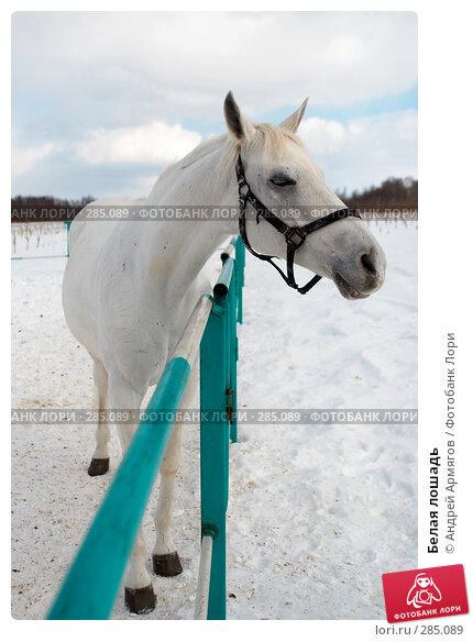 Белая лошадь, фото № 285089, снято 24 марта 2006 г. (c) Андрей Армягов / Фотобанк Лори