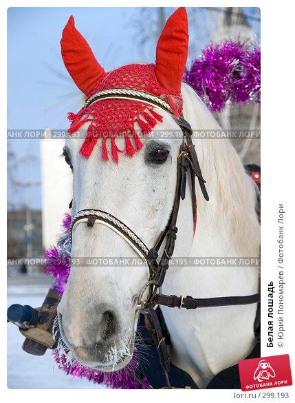 Белая лошадь, фото № 299193, снято 6 января 2008 г. (c) Юрий Пономарёв / Фотобанк Лори