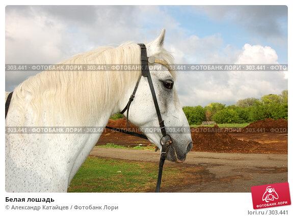 Белая лошадь, фото № 303441, снято 29 мая 2008 г. (c) Александр Катайцев / Фотобанк Лори