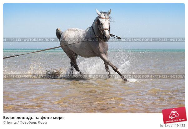 Белая лошадь на фоне моря, фото № 119433, снято 16 сентября 2007 г. (c) hunta / Фотобанк Лори