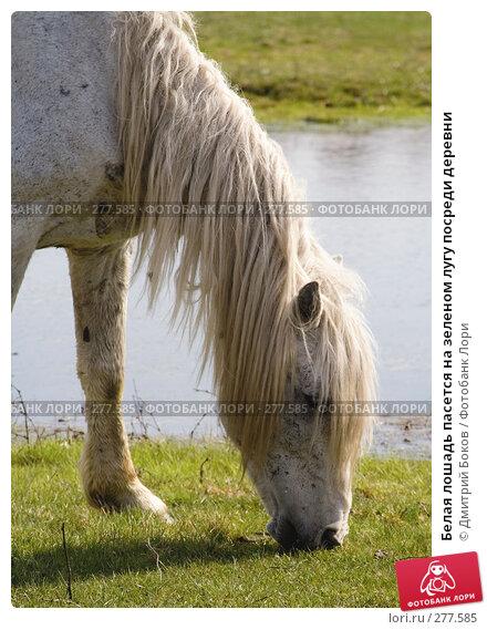 Белая лошадь пасется на зеленом лугу посреди деревни, фото № 277585, снято 20 апреля 2008 г. (c) Дмитрий Боков / Фотобанк Лори