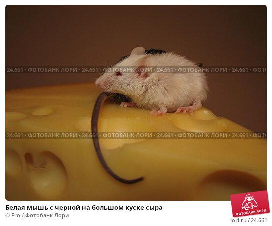 Белая мышь с черной на большом куске сыра, фото № 24661, снято 18 марта 2007 г. (c) Fro / Фотобанк Лори