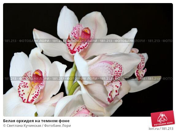 Купить «Белая орхидея на темном фоне», фото № 181213, снято 18 марта 2018 г. (c) Светлана Кучинская / Фотобанк Лори