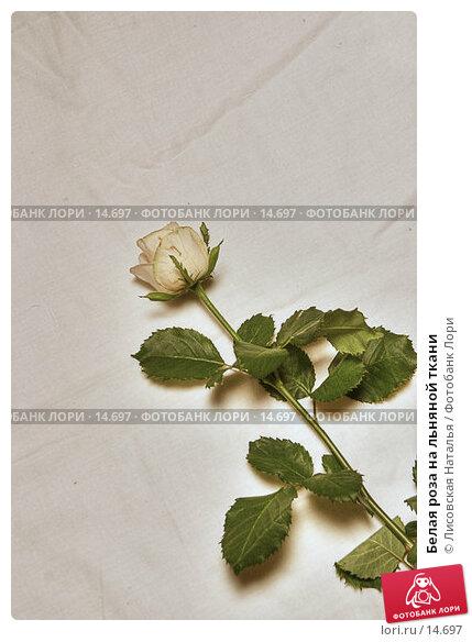 Белая роза на льняной ткани, фото № 14697, снято 18 сентября 2005 г. (c) Лисовская Наталья / Фотобанк Лори