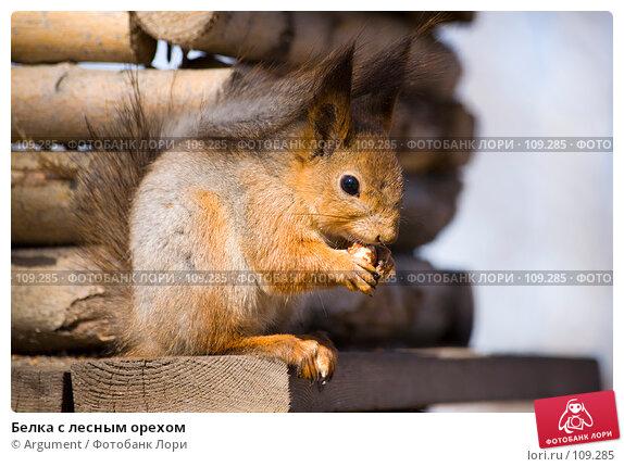Белка с лесным орехом, фото № 109285, снято 9 апреля 2007 г. (c) Argument / Фотобанк Лори