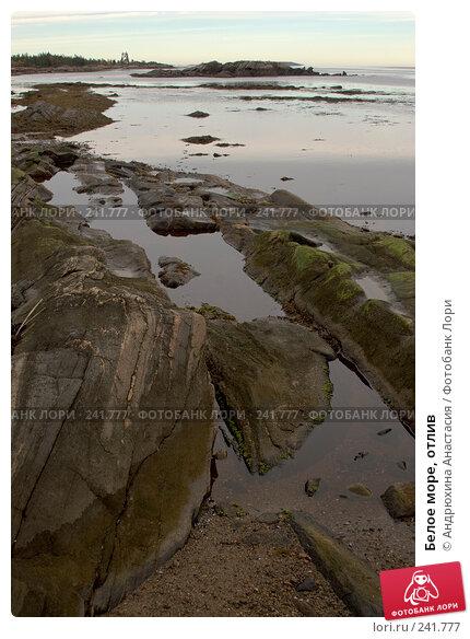 Белое море, отлив, фото № 241777, снято 24 сентября 2007 г. (c) Андрюхина Анастасия / Фотобанк Лори