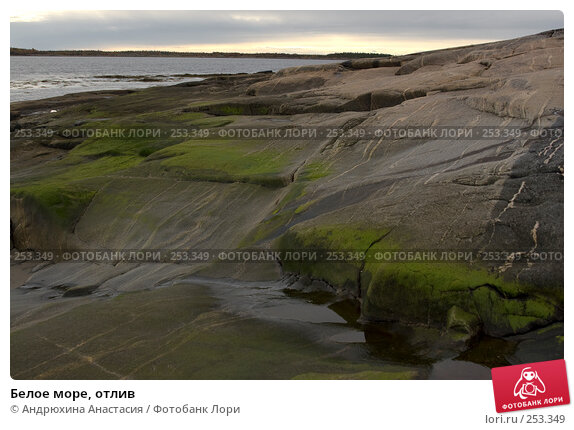 Белое море, отлив, фото № 253349, снято 24 сентября 2007 г. (c) Андрюхина Анастасия / Фотобанк Лори