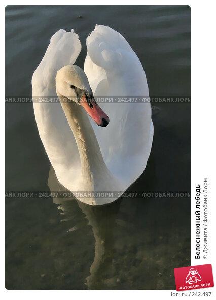 Купить «Белоснежный лебедь», фото № 242497, снято 29 октября 2007 г. (c) Дживита / Фотобанк Лори