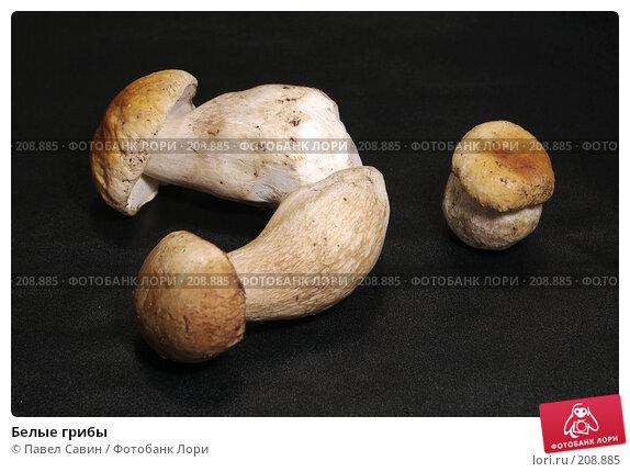 Белые грибы, фото № 208885, снято 27 мая 2017 г. (c) Павел Савин / Фотобанк Лори