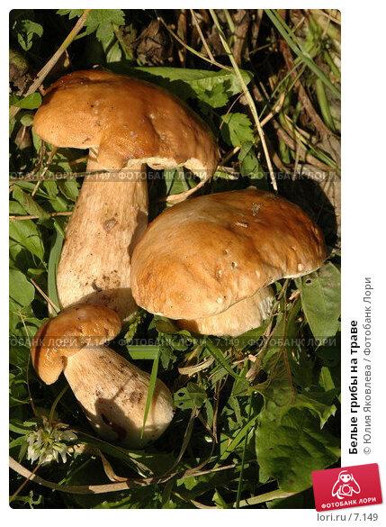 Белые грибы на траве, фото № 7149, снято 8 августа 2006 г. (c) Юлия Яковлева / Фотобанк Лори