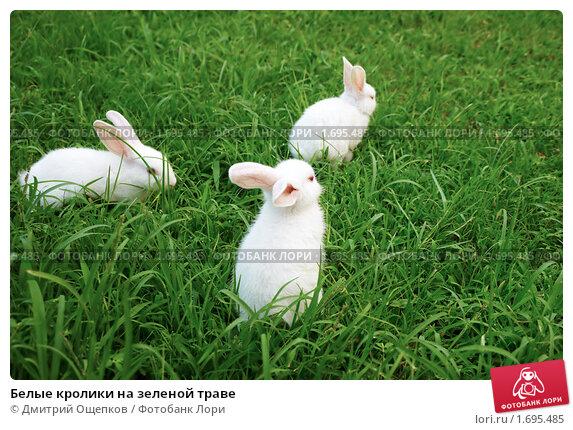 Белые кролики на зеленой траве. Стоковое фото, фотограф Дмитрий Ощепков / Фотобанк Лори
