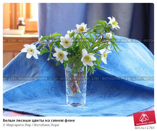 Белые лесные цветы на синем фоне, фото № 2761, снято 1 мая 2006 г. (c) Маргарита Лир / Фотобанк Лори