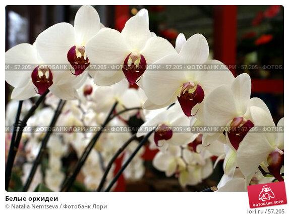 Белые орхидеи, эксклюзивное фото № 57205, снято 7 апреля 2007 г. (c) Natalia Nemtseva / Фотобанк Лори
