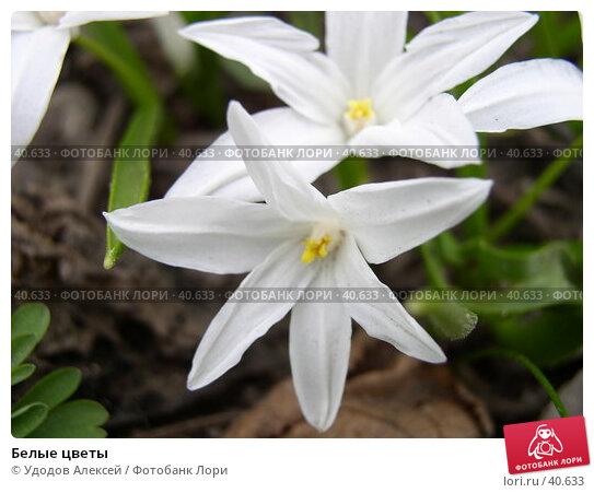 Белые цветы, фото № 40633, снято 18 апреля 2007 г. (c) Удодов Алексей / Фотобанк Лори