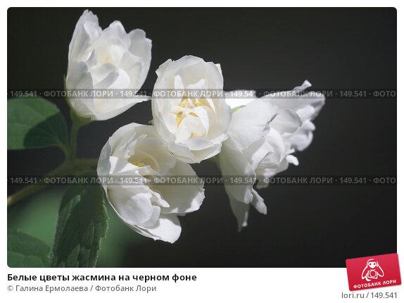 Белые цветы жасмина на черном фоне, фото № 149541, снято 20 июня 2007 г. (c) Галина Ермолаева / Фотобанк Лори