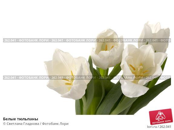 Белые тюльпаны, фото № 262041, снято 13 января 2008 г. (c) Cветлана Гладкова / Фотобанк Лори