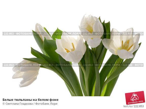 Белые тюльпаны на белом фоне, фото № 222853, снято 12 января 2008 г. (c) Cветлана Гладкова / Фотобанк Лори