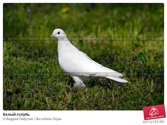Белый голубь, фото № 51701, снято 20 мая 2007 г. (c) Андрей Лабутин / Фотобанк Лори