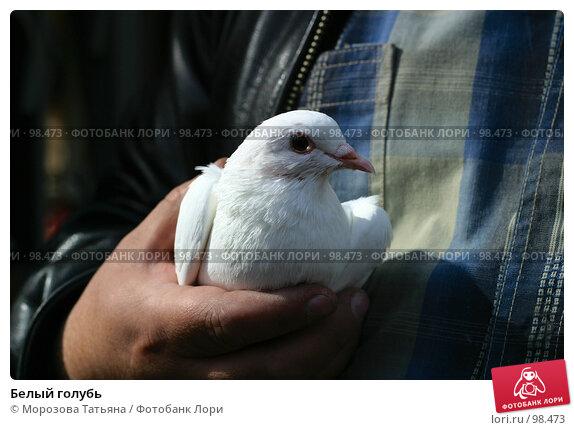 Белый голубь, фото № 98473, снято 16 сентября 2006 г. (c) Морозова Татьяна / Фотобанк Лори