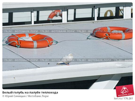 Белый голубь на палубе теплохода, фото № 176261, снято 21 сентября 2007 г. (c) Юрий Синицын / Фотобанк Лори