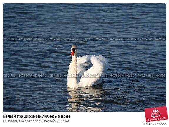 Белый грациозный лебедь в воде, фото № 257585, снято 29 марта 2008 г. (c) Наталья Белотелова / Фотобанк Лори