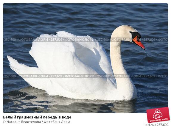 Белый грациозный лебедь в воде, фото № 257609, снято 29 марта 2008 г. (c) Наталья Белотелова / Фотобанк Лори