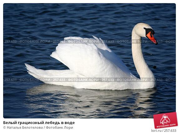 Белый грациозный лебедь в воде, фото № 257633, снято 29 марта 2008 г. (c) Наталья Белотелова / Фотобанк Лори
