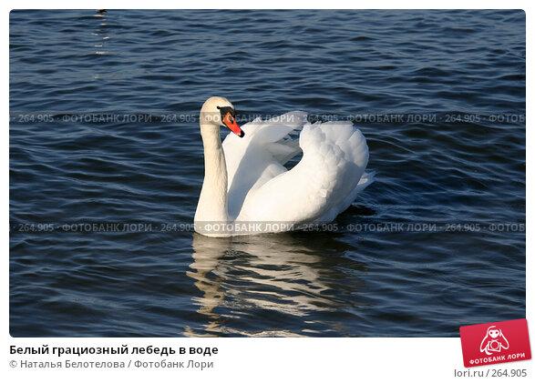 Белый грациозный лебедь в воде, фото № 264905, снято 29 марта 2008 г. (c) Наталья Белотелова / Фотобанк Лори