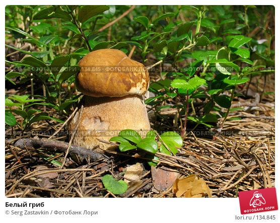 Белый гриб, фото № 134845, снято 13 августа 2005 г. (c) Serg Zastavkin / Фотобанк Лори