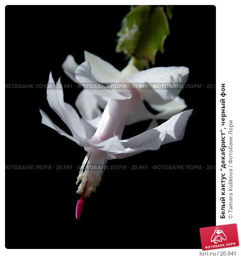 "Белый кактус ""декабрист"", черный фон, фото № 20941, снято 1 марта 2007 г. (c) Tamara Kulikova / Фотобанк Лори"