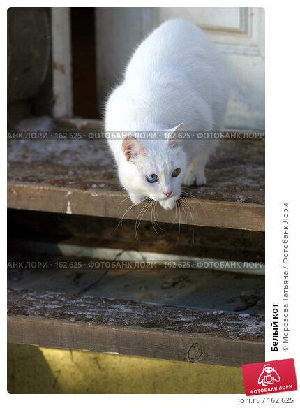 Белый кот, фото № 162625, снято 15 января 2006 г. (c) Морозова Татьяна / Фотобанк Лори