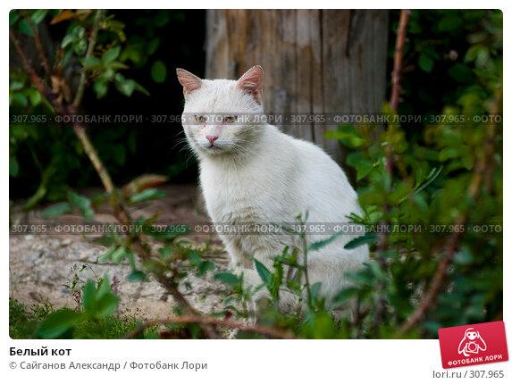 Белый кот, эксклюзивное фото № 307965, снято 1 августа 2005 г. (c) Сайганов Александр / Фотобанк Лори