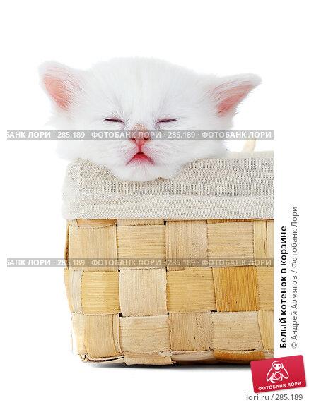 Белый котенок в корзине, фото № 285189, снято 26 марта 2007 г. (c) Андрей Армягов / Фотобанк Лори