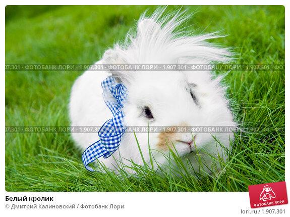 Белый кролик. Стоковое фото, фотограф Дмитрий Калиновский / Фотобанк Лори